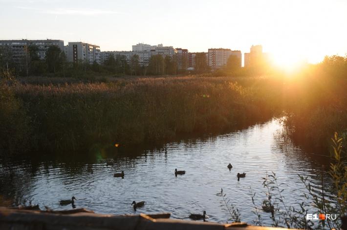 Все как один сходятся во мнении, что в Чкаловском районе очень много зелени