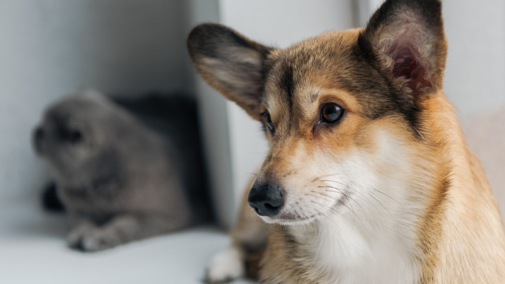 Красноярский агрохолдинг начал выпускать полнорационные корма для собак
