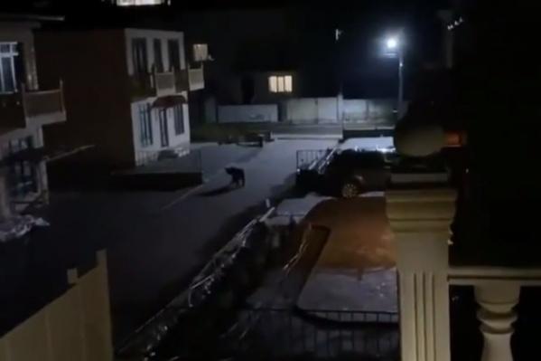 Животное вышло на улицу ночью