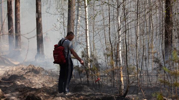 В Тюменской области ищут волонтеров, чтобы тушить лесные пожары
