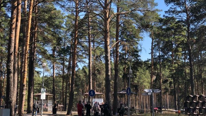 Тюменцы встречают Первомай в Гилёвской роще, где еще недавно было коммунальное ЧП. Что там сейчас?
