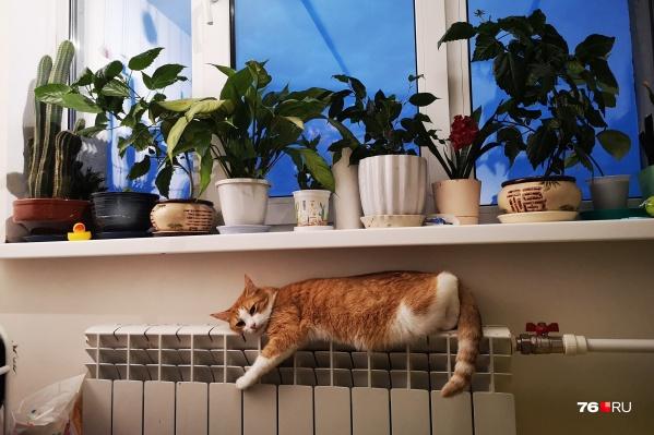 В Ярославле скоро отключат отопление