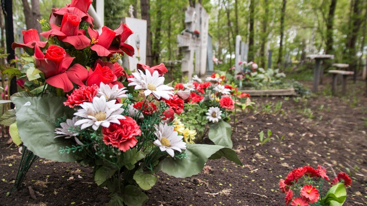 В лесах Тольятти уберут кладбища кошек и собак