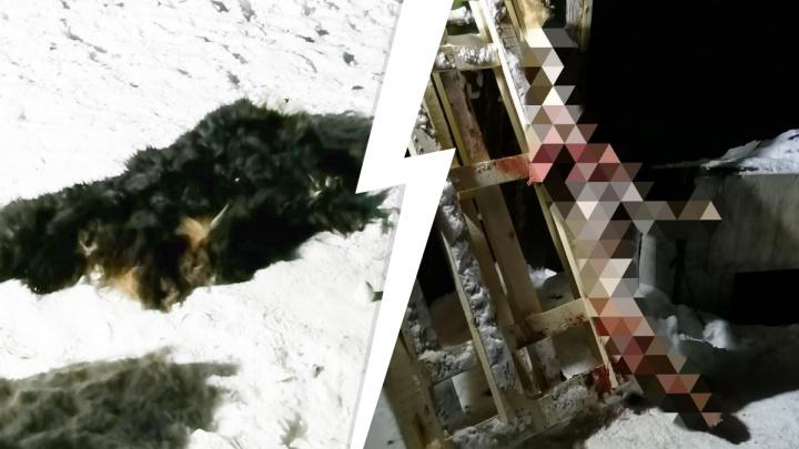 «Действовал профессионально». В саду под Екатеринбургом живодер убил и разделал свою собаку