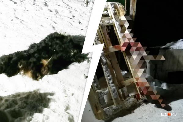 Зоозащитники приехали в сад, где собственными глазами увидели окровавленную тушу и шкуру пса