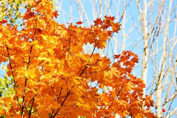 Осень в этом году не очень теплая