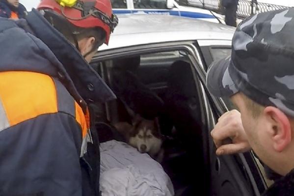 Доставать зверя из авто пришлось спасателям
