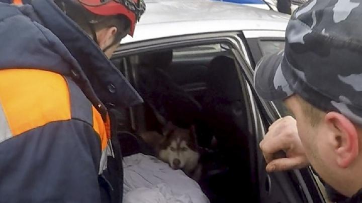 В Ярославле бездомный пес запрыгнул в машину женщины и отказался выходить