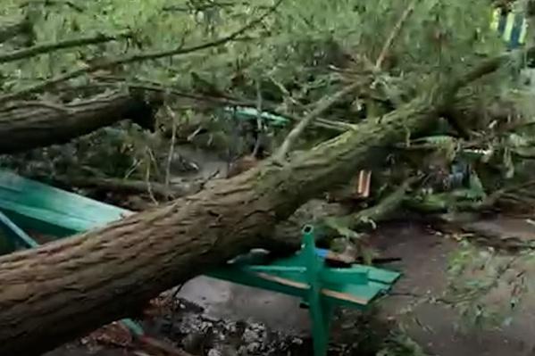 Лишь по счастливой случайности от падающих деревьев не пострадали люди