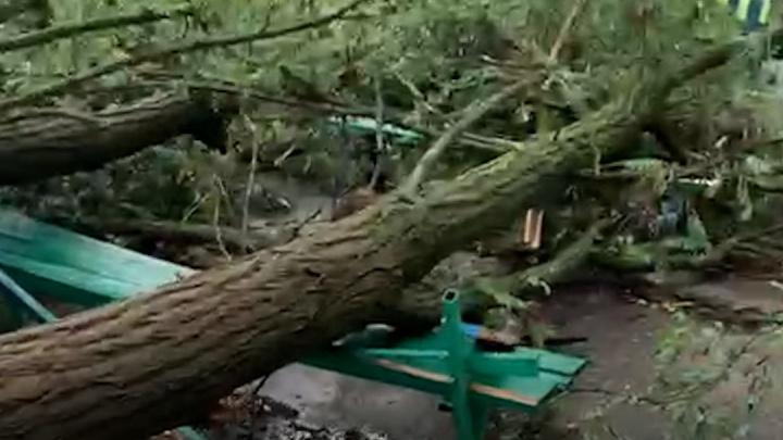 Разбитые окна, сорванные крыши и поваленные деревья: последствия шторма в Волгоградской области попали на видео