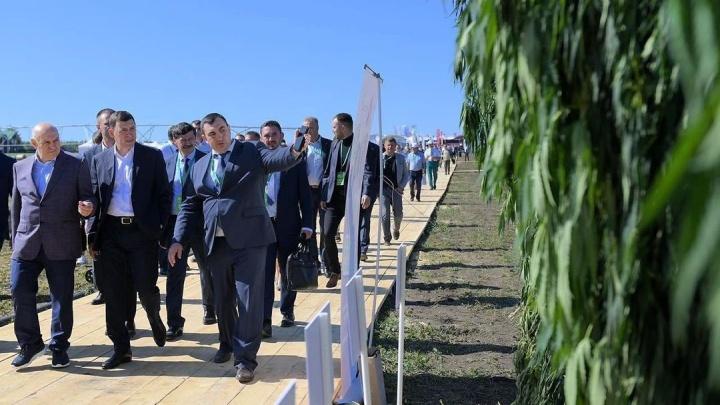 Евгений Куйвашев предложил выращивать коноплю, чтобы пополнить областной бюджет