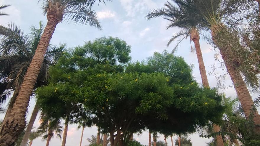 «Человек погибает, а они тянут время!» Что российских туристов может ждать на «президентских каникулах» в Египте