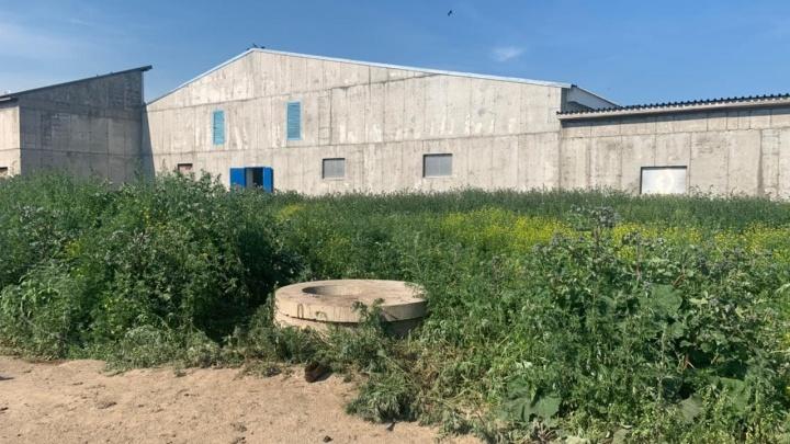 На свинокомплексе в Назарово погибли двое рабочих