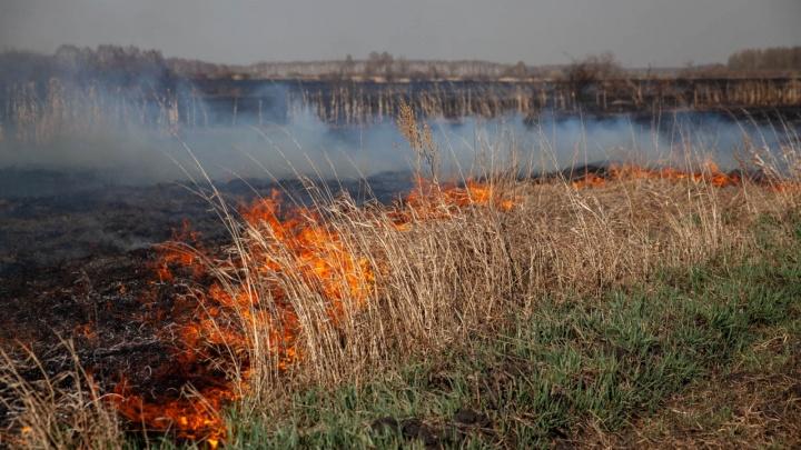 Окно не открыть: в Тюмени чувствуется сильный запах гари — все из-за торфяных пожаров