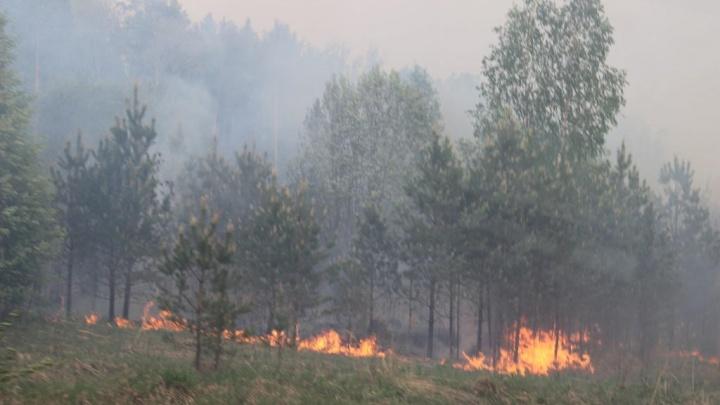 В Пермском крае произошел крупнейший за шесть лет лесной пожар. Фото со спутника