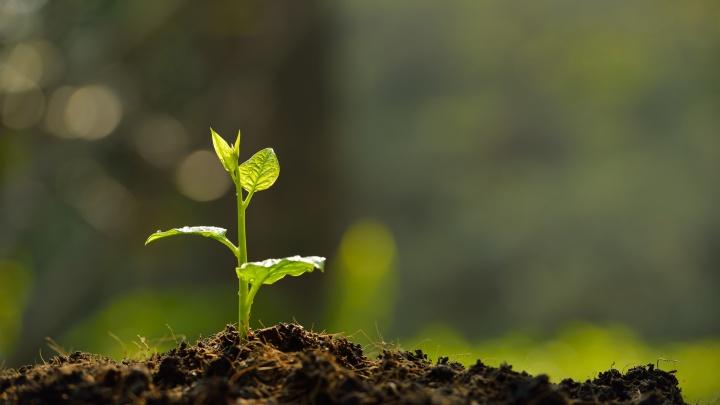 Какие кусты и плодовые деревья нужно посадить до конца октября? Инструкция от опытного садовода