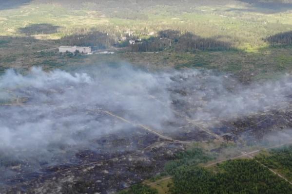Пламя уничтожило огромную часть городского леса