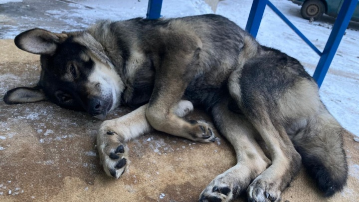 В Красноярске закрывается один из самых больших приютов для собак