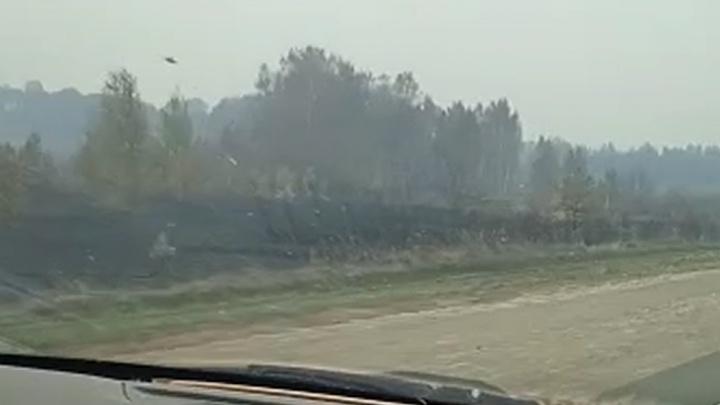 «Бедная природа»: водители сняли выжженную после лесных пожаров землю рядом с Каменском-Уральским