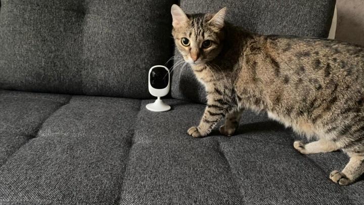 Брысь со стола: видеонаблюдение присмотрит за домашними животными, пока хозяев нет дома