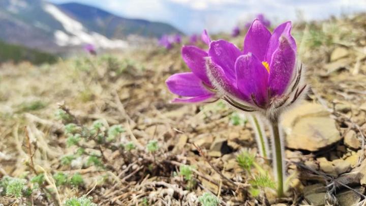 К середине недели в Красноярск придет летняя погода