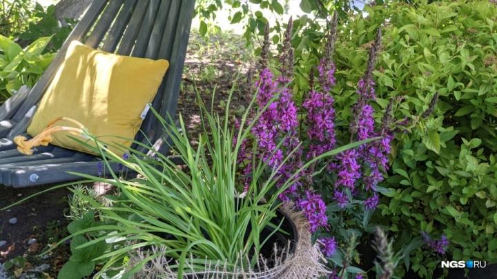 Как сделать крутой сад? 5 простых правил от ландшафтного дизайнера (много денег тратить не придется)