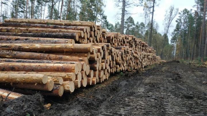 Замначальника колонии в Красноярском крае попался на вырубке леса на 23 миллиона
