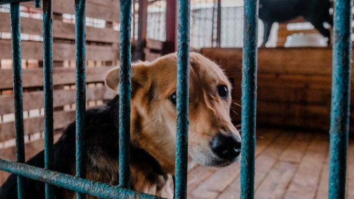 В 5 муниципалитетах Югры до конца года откроются приюты для бездомных животных