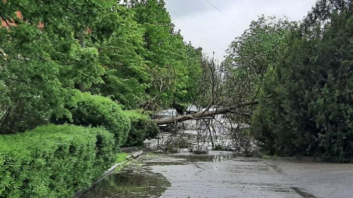 Ураган в Волгодонске вырвал с корнем десятки деревьев — повреждены машины и ЛЭП
