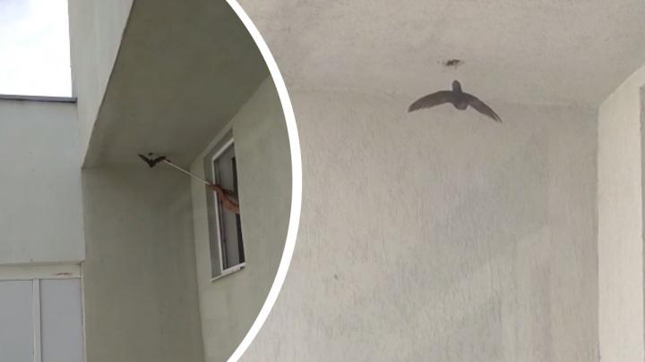 Екатеринбуржец спас птицу, которая запуталась в леске в многоэтажке