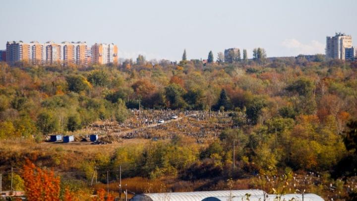 Власти заказали уничтожение 1,4 тысячи деревьев на Северном кладбище