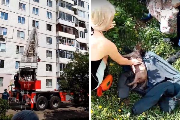 Пожарные вынесли собаку из горящей квартиры