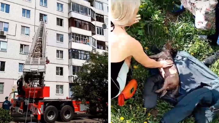 Хозяев дома не было: в Ярославле из горящей квартиры спасли собаку. Видео