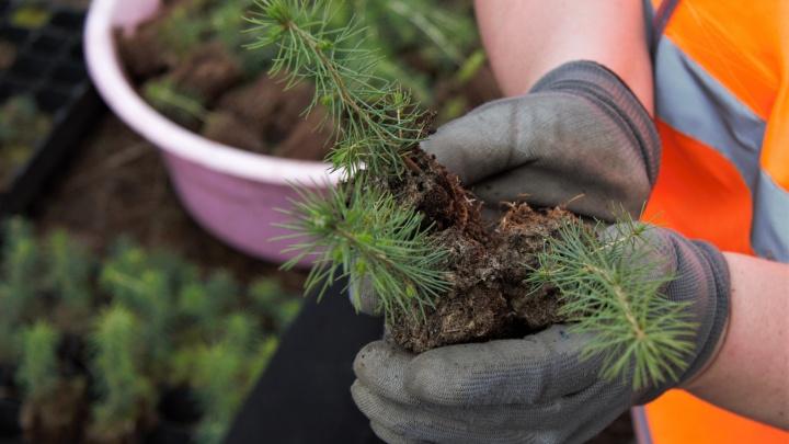 «Титан»» восстановит более 18 тысяч гектаров леса в 2021 году