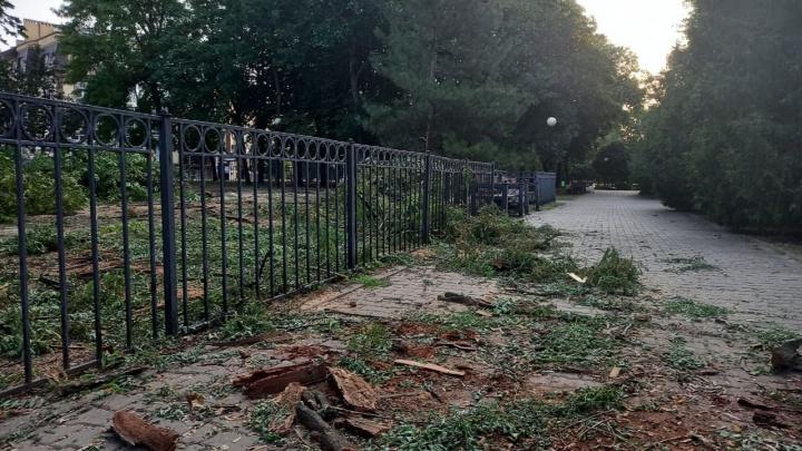 В Таганроге начали пилить деревья в историческом Петровском сквере