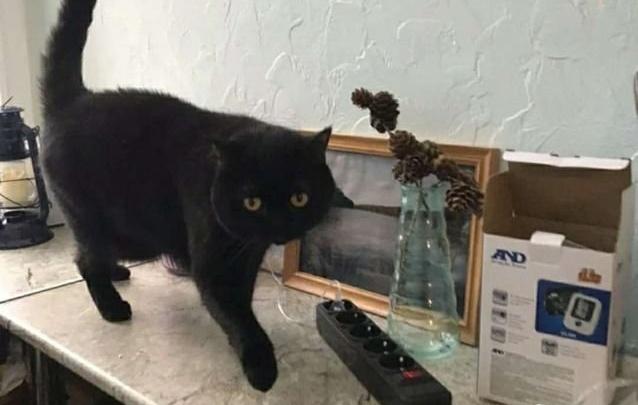 Кот по цене «трешки» и конь за миллион. Каких животных пытаются продать через объявления в Тюмени