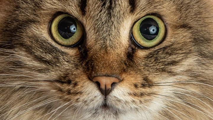 Посмотрите в глаза котам, пережившим полет из окна и предательство хозяев (среди них Гарфилд)