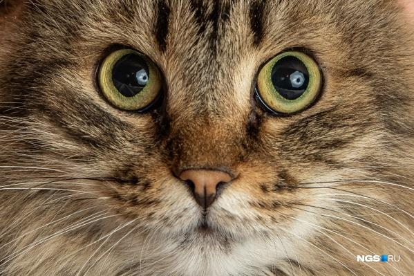 Кошке сложно доверять людям после жизни на улице