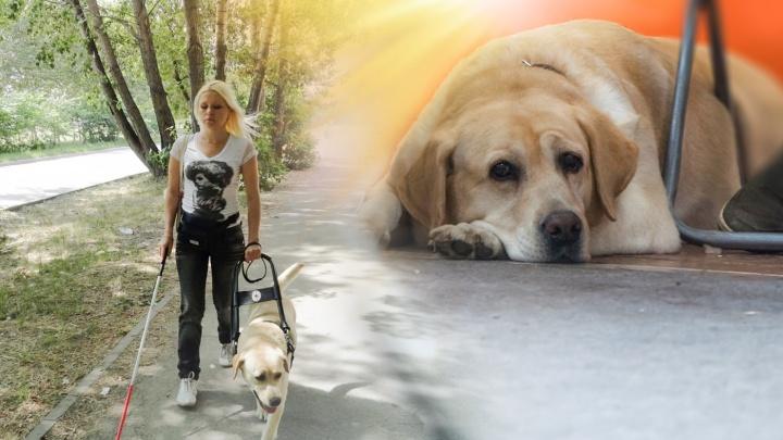 «Молодая? С собакой гуляешь — дойдешь сама». Слепая с донорской почкой — о постоянной борьбе за лекарства