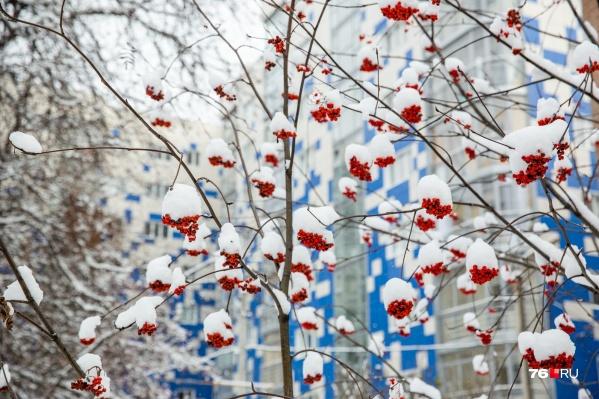 На Рождество в Ярославле установился легкий морозец