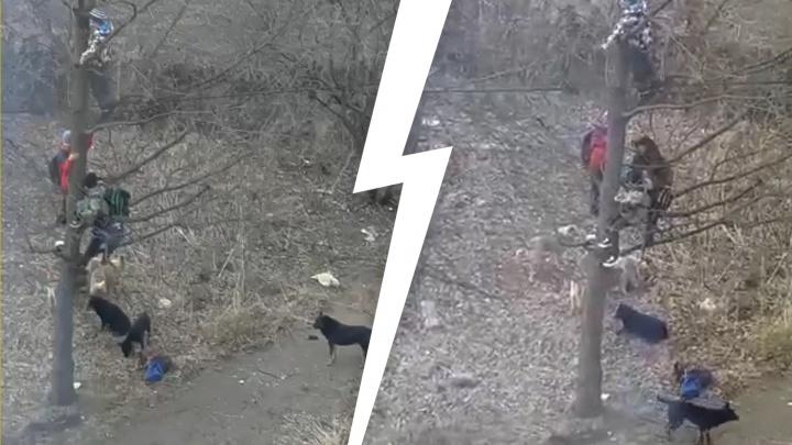 Следователи выяснят, кто виноват в том, что дети спасались от бездомных собак на дереве в Башкирии