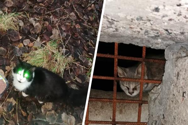 По словам волонтеров, в подвале укрылись от морозов от двух до четырех кошек. Их пытались поймать