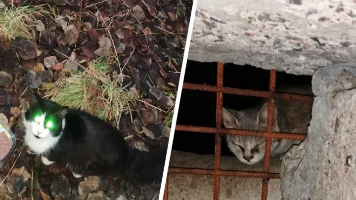 В Северодвинске кошек замуровали в подвале. Людей, которые их спасали, обвинили в порче имущества