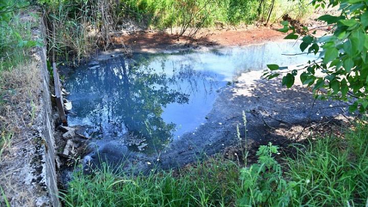 Едкий запах и мертвая рыба: в Ярославле выявили сброс бытовых стоков в Пятовский ручей