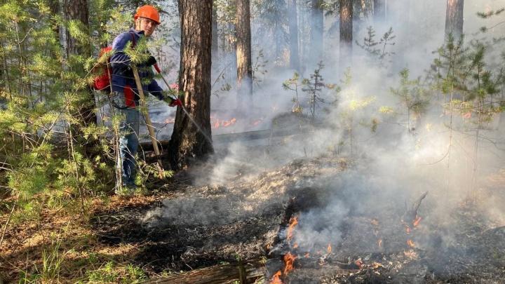 «Здесь километровые полосы сухих дров!»: екатеринбургские волонтеры рассказали, как разгораются лесные пожары