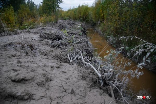 Так сейчас выглядит берег канавы у реки Юрас