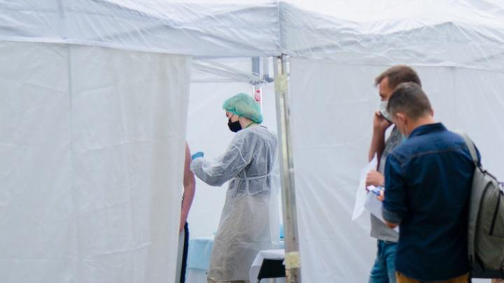 Северян с поддельными сертификатами о вакцинации от COVID-19 могут посадить, заявили в МВД Поморья