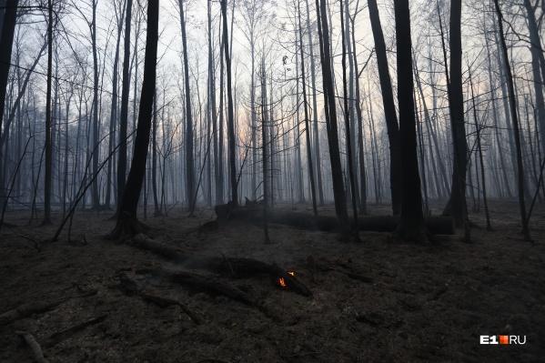 Пожар выжег гектары леса под Екатеринбургом