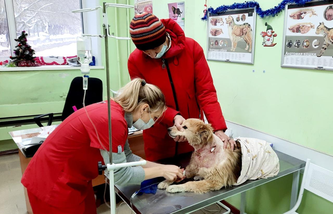 У собаки были тяжелые раны от укусов сородичей