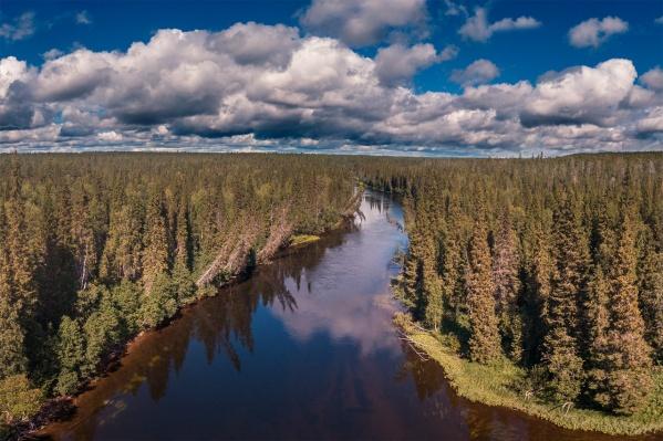 Лесная промышленность России тоже постепенно цифровизируется: регионы уже начинают выкладывать в открытый доступ данные о лесах